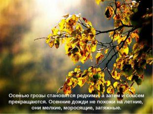 Осенью грозы становятся редкими, а затем и совсем прекращаются. Осенние дожди