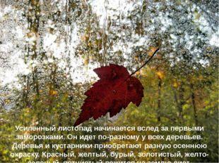 Усиленный листопад начинается вслед за первыми заморозками. Он идет по-разном