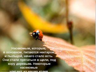 Насекомым, которые, в основном, питаются нектаром и пыльцой, нечего стало ест