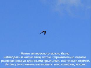 Много интересного можно было наблюдать в жизни птиц летом. Стремительно летал