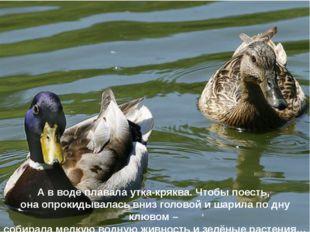 А в воде плавала утка-кряква. Чтобы поесть, она опрокидывалась вниз головой и