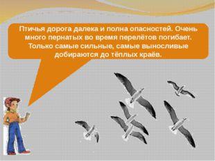 Птичья дорога далека и полна опасностей. Очень много пернатых во время перелё