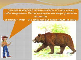 Про ежа и медведя можно сказать, что они «сами себе кладовые». Летом и осенью