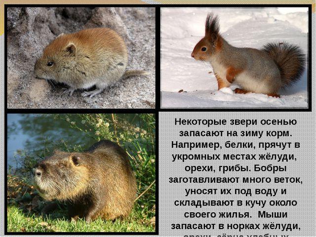 Некоторые звери осенью запасают на зиму корм. Например, белки, прячут в укром...