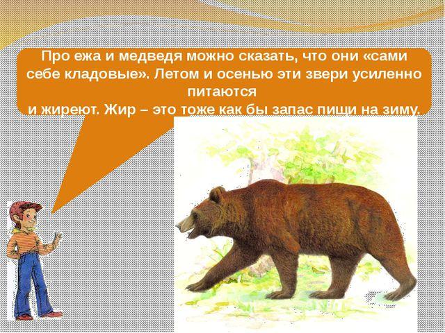 Про ежа и медведя можно сказать, что они «сами себе кладовые». Летом и осенью...