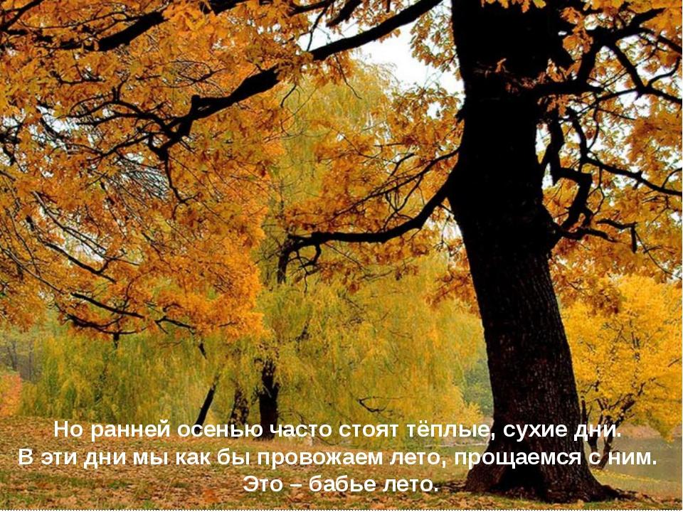 Но ранней осенью часто стоят тёплые, сухие дни. В эти дни мы как бы провожаем...