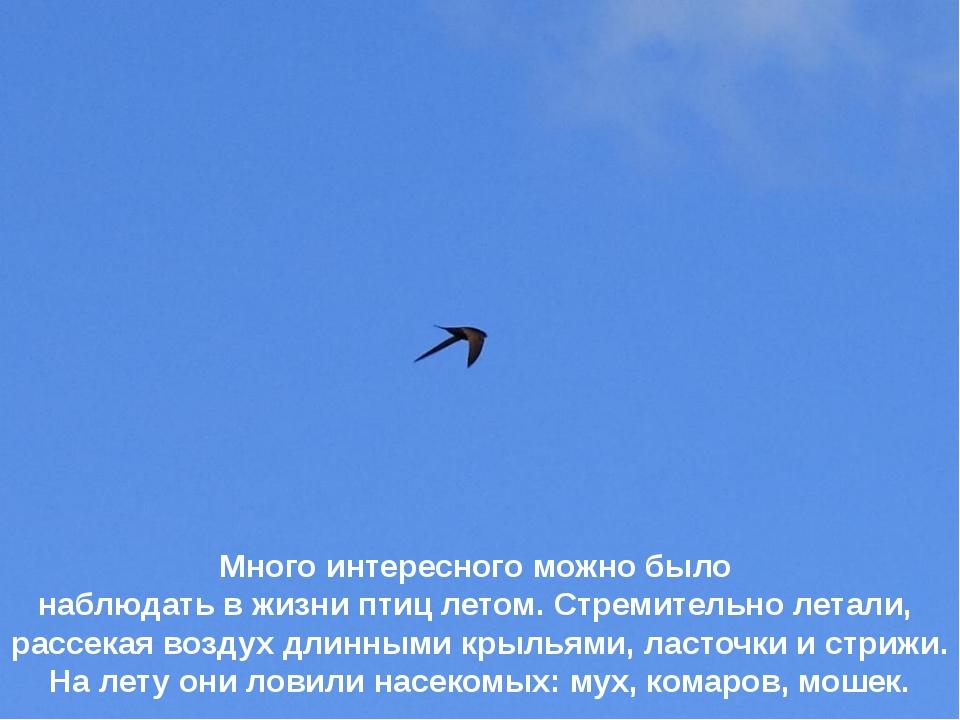 Много интересного можно было наблюдать в жизни птиц летом. Стремительно летал...