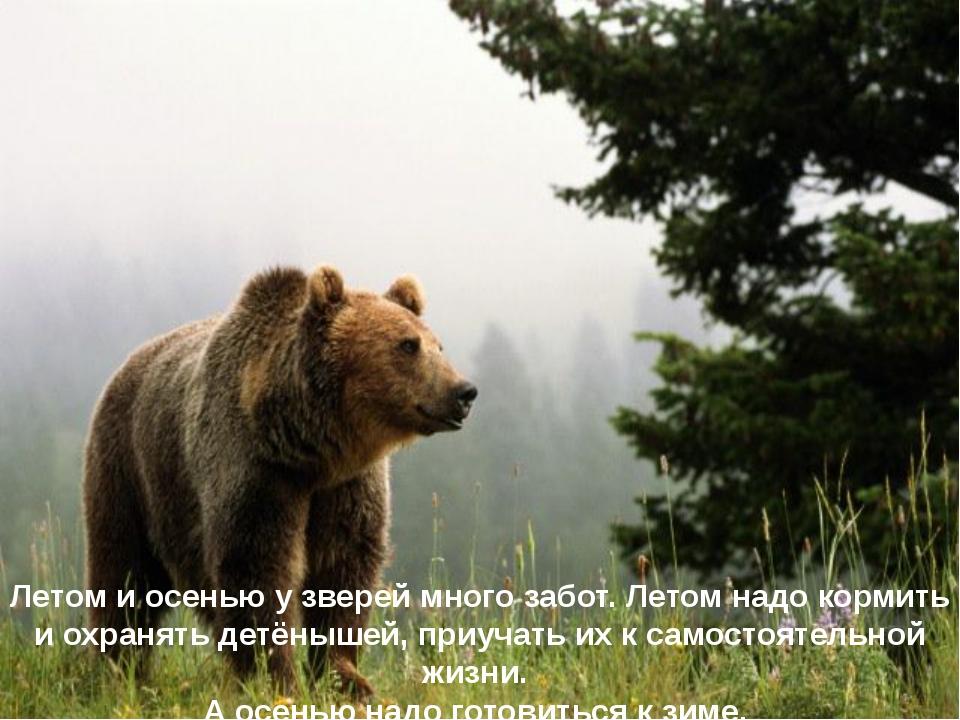 Летом и осенью у зверей много забот. Летом надо кормить и охранять детёнышей,...