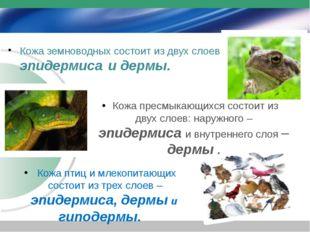 Кожа земноводных состоит из двух слоев эп– эпидермиса и дермы. Кожа птиц и мл