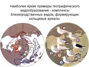 Наиболее яркие примеры географического видообразования - комплексы близкородс