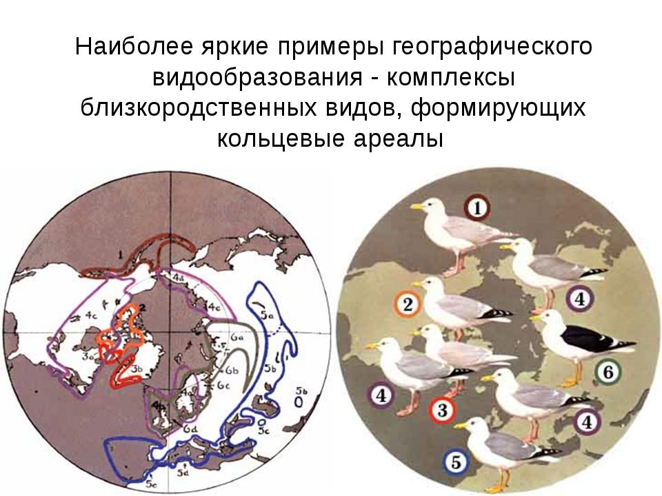 Наиболее яркие примеры географического видообразования - комплексы близкородс...