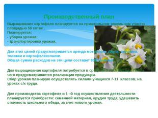 Выращивание картофеля планируется на пришкольном земельном участке площадью 5