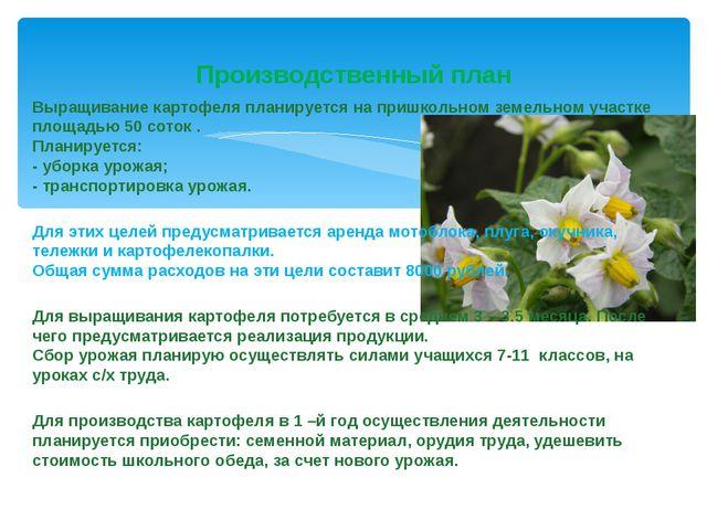 Выращивание картофеля планируется на пришкольном земельном участке площадью 5...