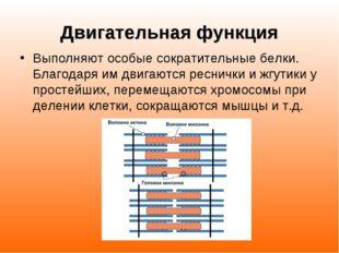 Двигательная функция Выполняют особые сократительные белки. Благодаря им двиг