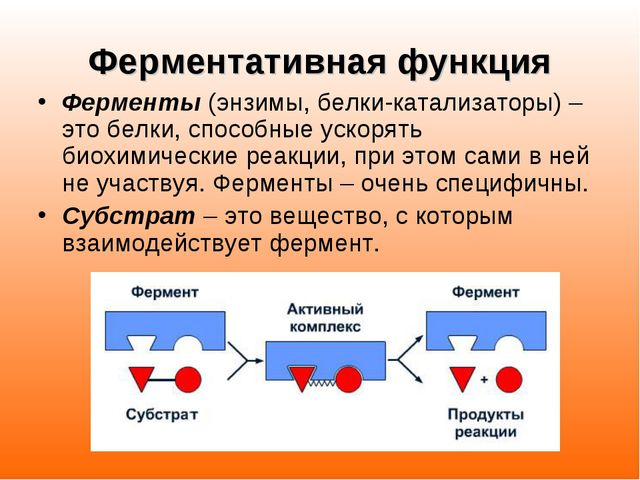 Ферментативная функция Ферменты (энзимы, белки-катализаторы) – это белки, спо...