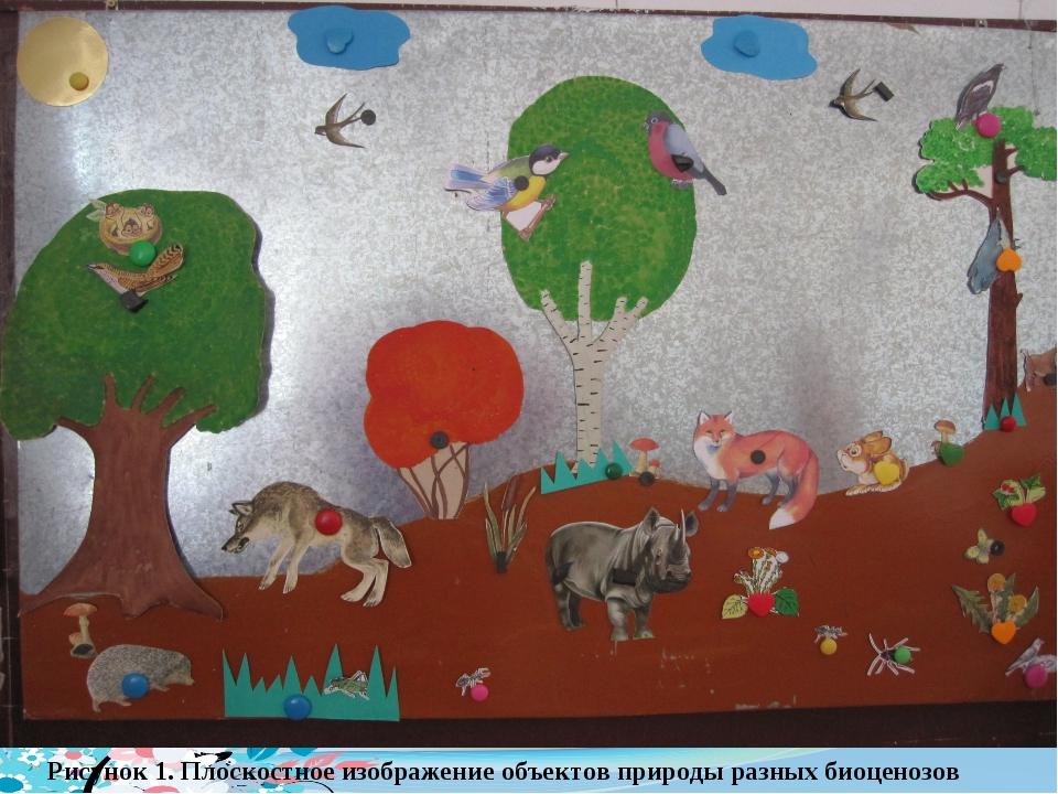 Рисунок 1. Плоскостное изображение объектов природы разных биоценозов