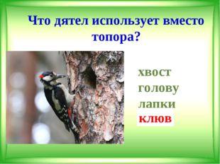 Что дятел использует вместо топора? хвост голову лапки клюв клюв