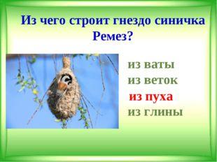 Из чего строит гнездо синичка Ремез? из ваты из веток из пуха из глины из