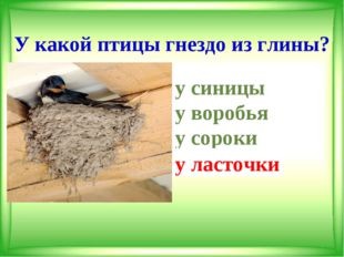 У какой птицы гнездо из глины? у синицы у воробья у сороки у ласточки у л