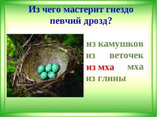 Из чего мастерит гнездо певчий дрозд? из камушков из веточек из мха из