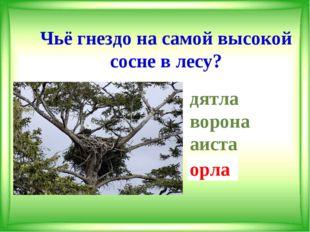 Чьё гнездо на самой высокой сосне в лесу? дятла ворона аиста орла орла