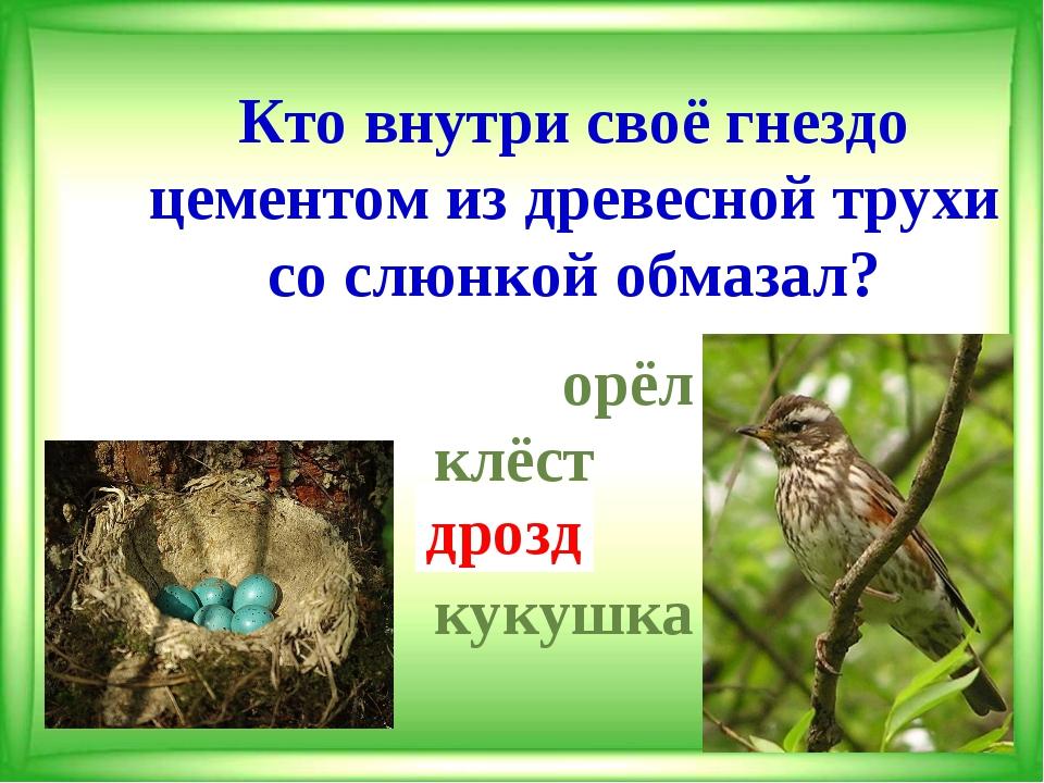 Кто внутри своё гнездо цементом из древесной трухи со слюнкой обмазал?  орёл...