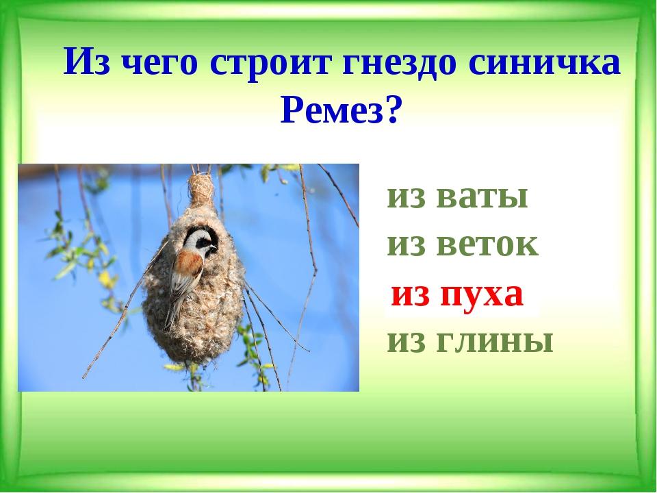 Из чего строит гнездо синичка Ремез? из ваты из веток из пуха из глины из...