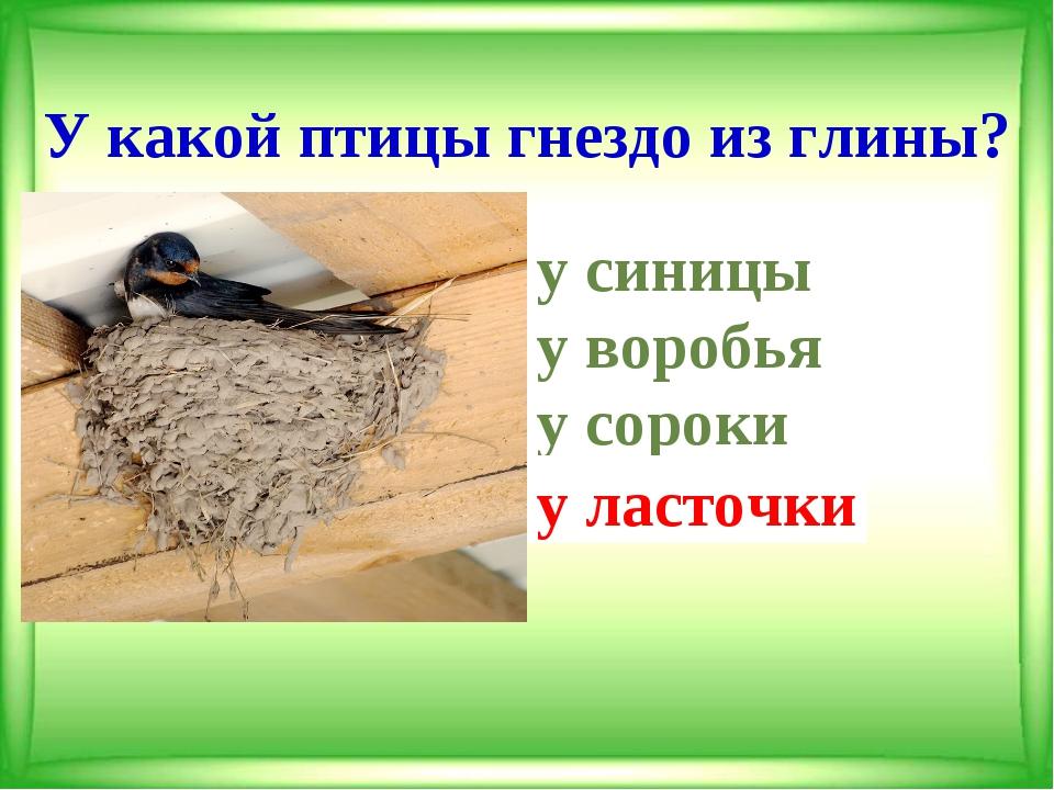 У какой птицы гнездо из глины? у синицы у воробья у сороки у ласточки у л...