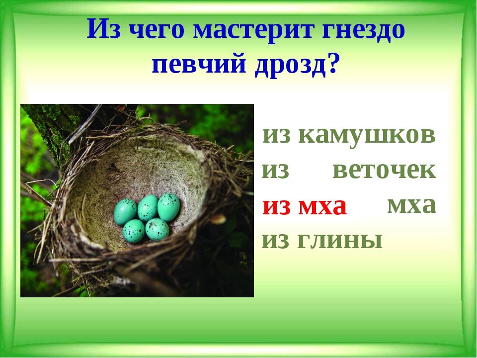 Из чего мастерит гнездо певчий дрозд? из камушков из веточек из мха из...