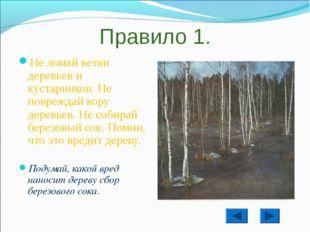 Правило 1. Не ломай ветви деревьев и кустарников. Не повреждай кору деревьев.