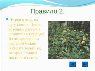 Правило 2. Не рви в лесу, на лугу цветов. Пусть красивые растения останутся в