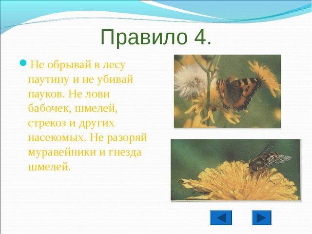 Правило 4. Не обрывай в лесу паутину и не убивай пауков. Не лови бабочек, шме...