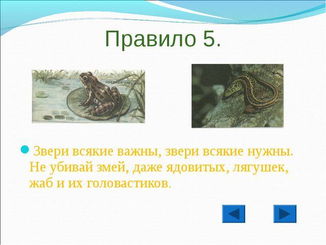 Правило 5. Звери всякие важны, звери всякие нужны. Не убивай змей, даже ядови...