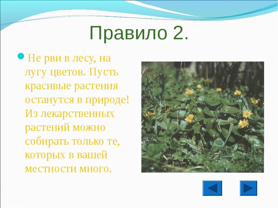 Правило 2. Не рви в лесу, на лугу цветов. Пусть красивые растения останутся в...