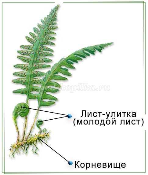 http://ped-kopilka.ru/upload/blogs/10621_c8fc747ef1aeb3f4f11360c1fd78fb90.jpg.jpg
