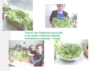 Только при тщательном уходе у нас вырос хороший урожай витаминов к нашему ст