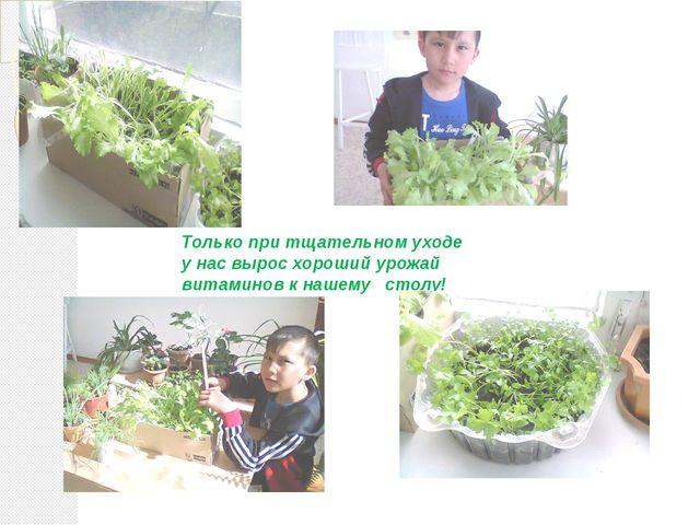Только при тщательном уходе у нас вырос хороший урожай витаминов к нашему ст...