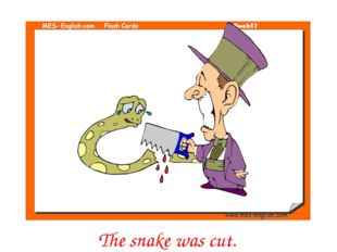 The snake was cut.
