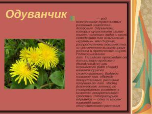 Одуванчик Одува́нчик— род многолетних травянистых растений семейства Астровы