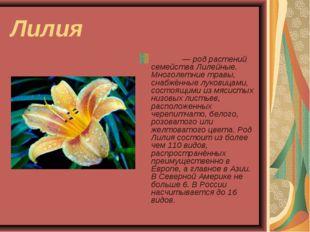 Лилия Ли́лия— род растений семейства Лилейные. Многолетние травы, снабжённые
