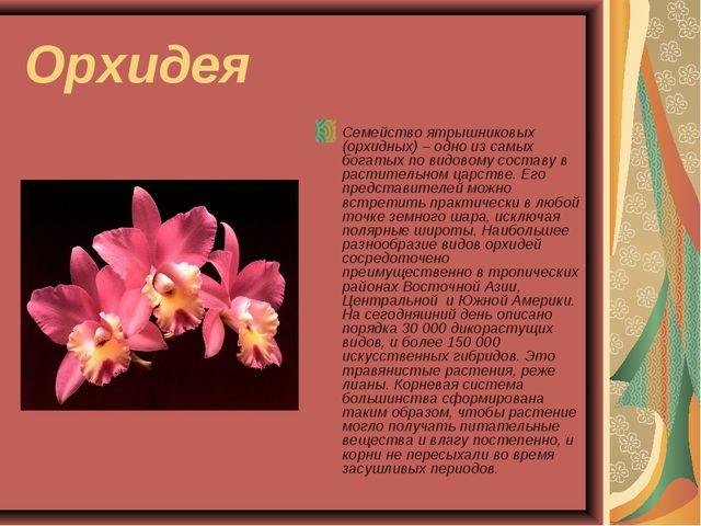 Орхидея Семейство ятрышниковых (орхидных) – одно из самых богатых по видовому...