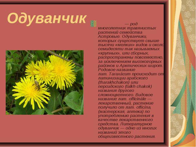 Одуванчик Одува́нчик— род многолетних травянистых растений семейства Астровы...