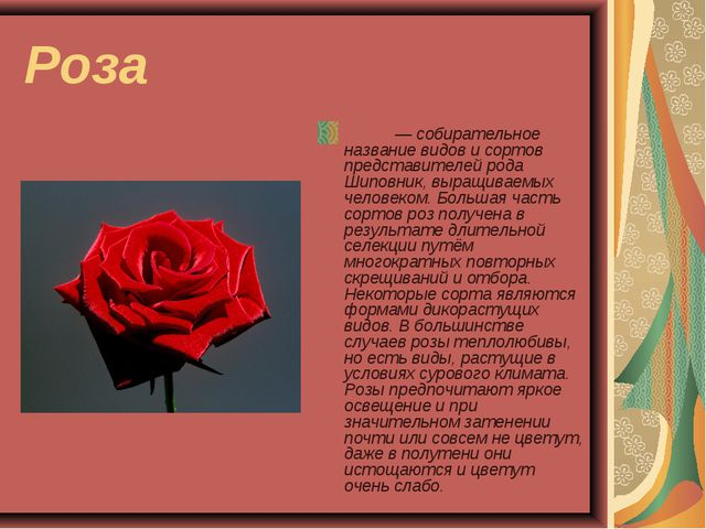 Роза Ро́за — собирательное название видов и сортов представителей рода Шиповн...