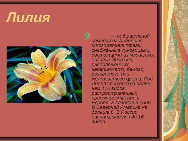Лилия Ли́лия— род растений семейства Лилейные. Многолетние травы, снабжённые...
