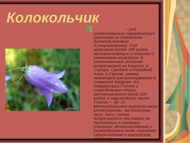 Колокольчик Колоко́льчик — род исключительно травянистых растений из семейств...