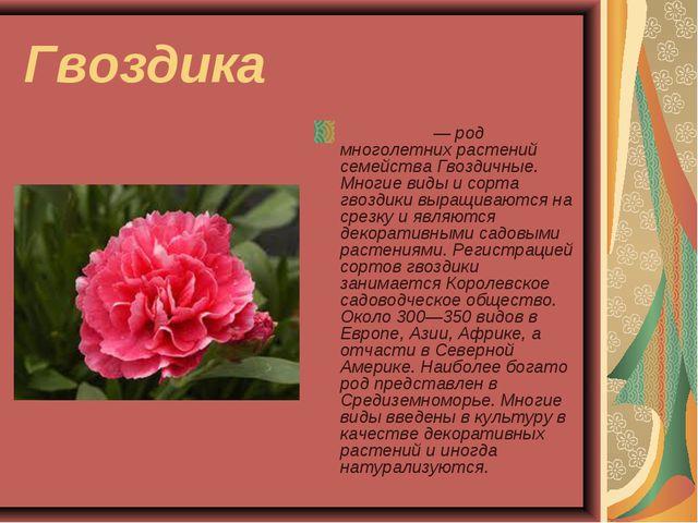 Гвоздика Гвозди́ка — род многолетних растений семейства Гвоздичные. Многие ви...