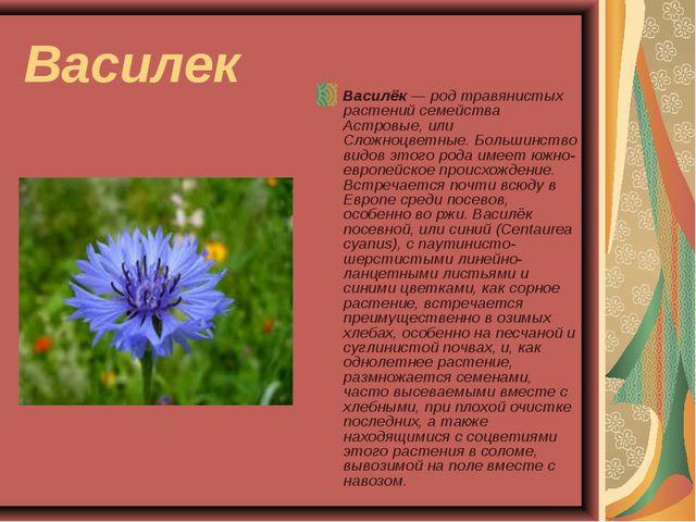 Василек Василёк — род травянистых растений семейства Астровые, или Сложноцвет...