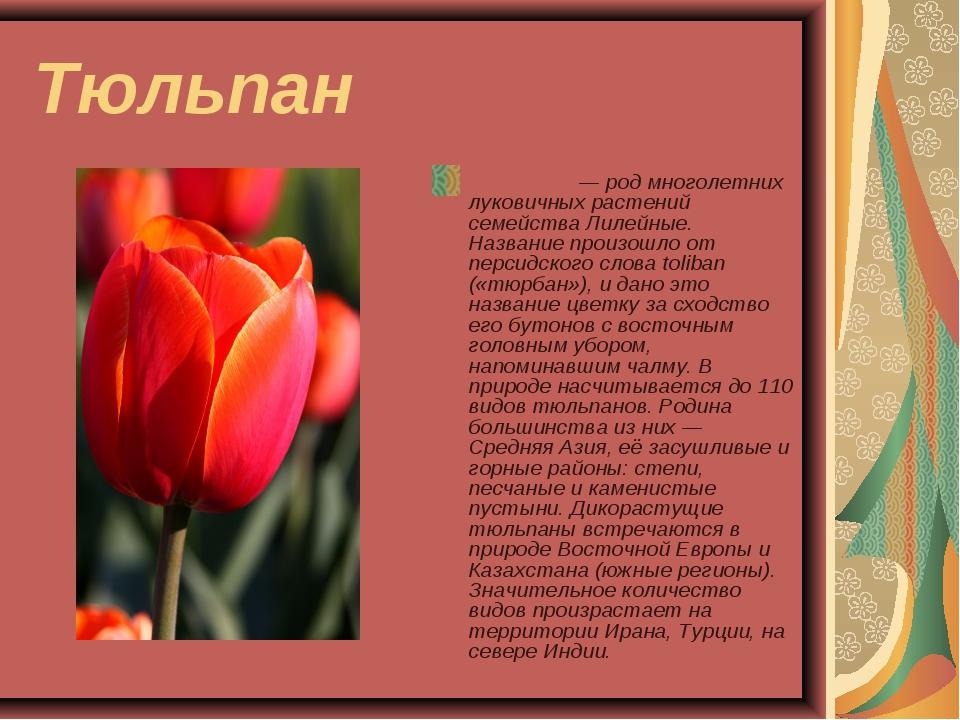 Тюльпан Тюльпа́н — род многолетних луковичных растений семейства Лилейные. На...