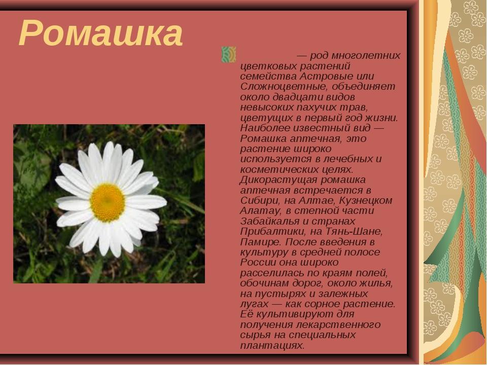 Ромашка Рома́шка — род многолетних цветковых растений семейства Астровые или...