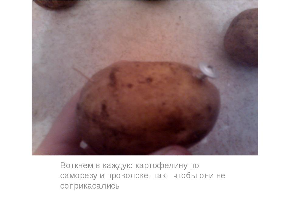 Воткнем в каждую картофелину по саморезу и проволоке, так, чтобы они не сопри...